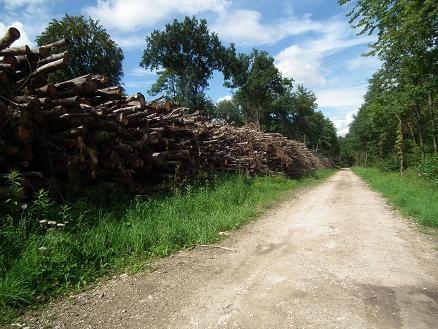 bois-energie-dans-les-grands-bois